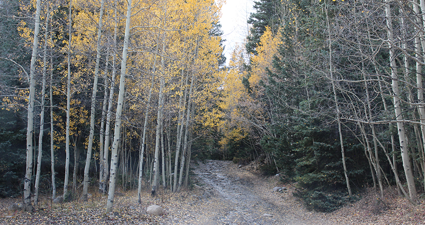 Aspen Acres Campground Rye Colorado -Local Trails for OHV, Hiking, Mountain Biking and Horseback Riding